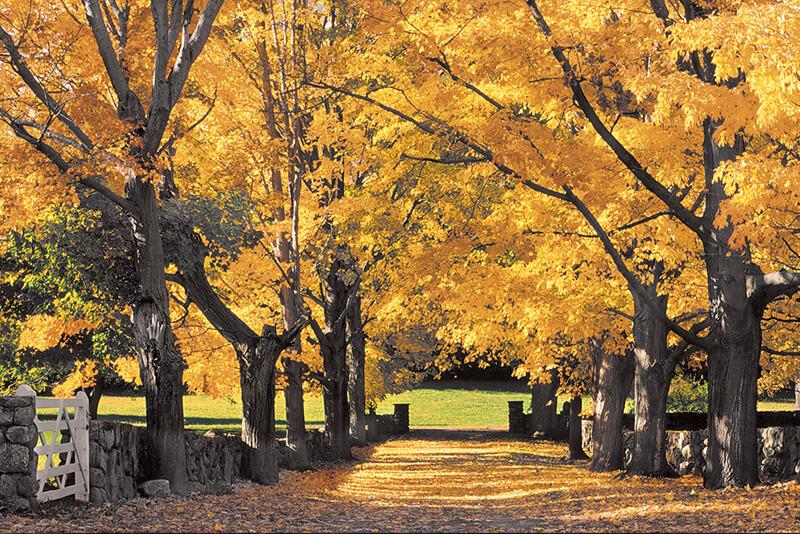 appleton farms fall foliage